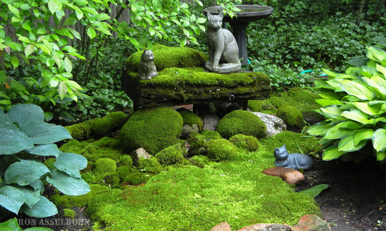 ... Cat And Moss, Waterfalls