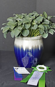 Best Container Grown Hosta Award