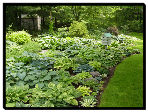 Hosta Garden Design software for room design