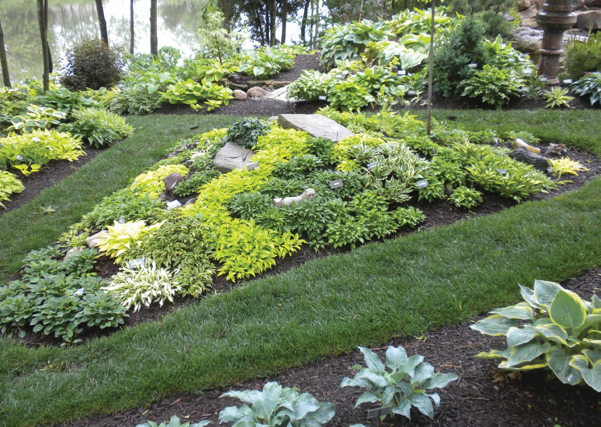 Randyu0027s Landscaping Has Earned Him The Moniker U201cThe Man Who Paints With  Hostas.u201d He Suggests Planting Hostas In Various Shapes, Shades And  Groupings To Help ...